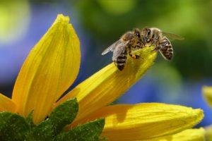 Bio und Pestizide